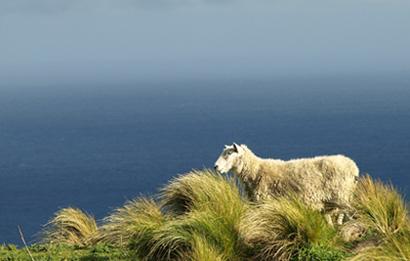 Austauschland Neuseeland